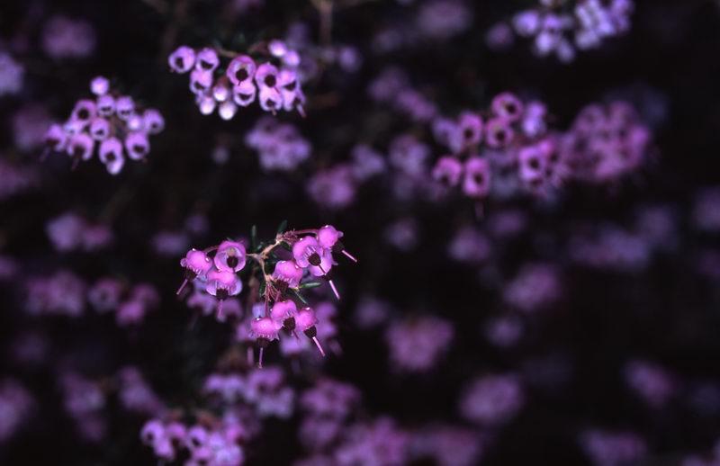 2_tameshidori_017rs