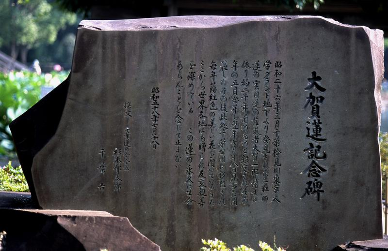 5_2_ogahasu_002r