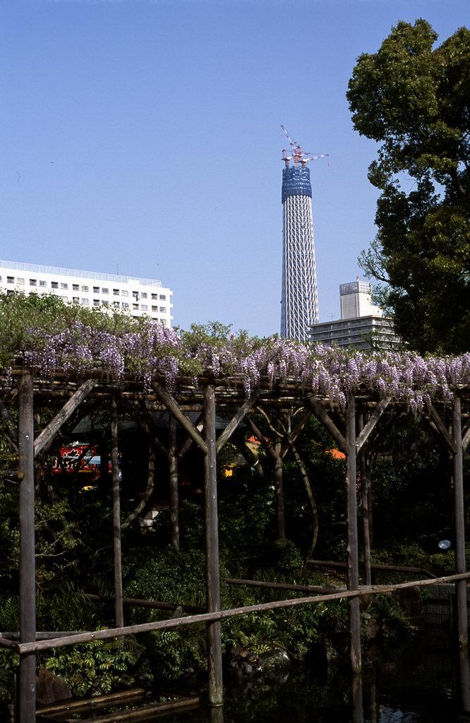 2_fujisanbu034