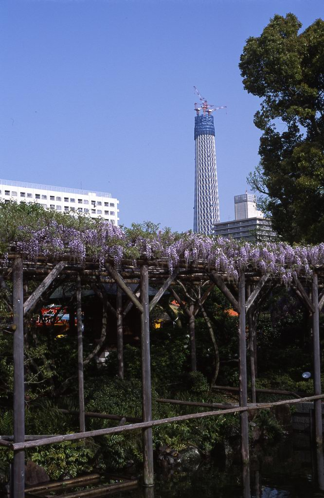 9_fujisanbu034r